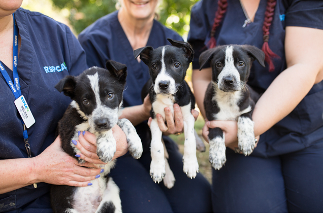 Dumped puppies from Inala in Brisbane Update