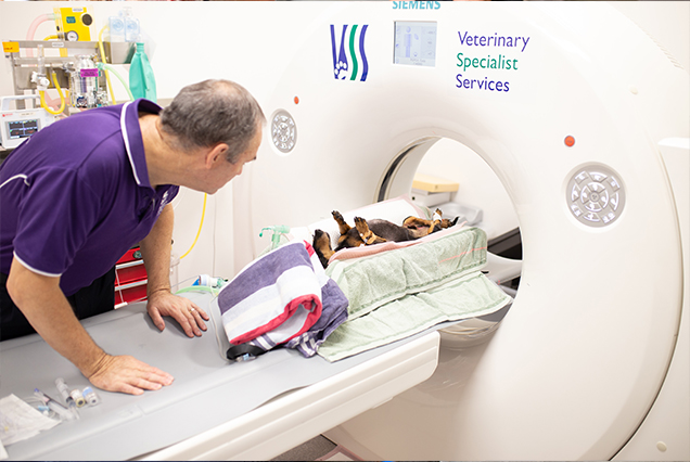 CT scans for dogs at Veterinary Specialist Services