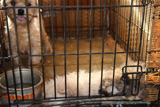 244 dogs were seized from conditions like these