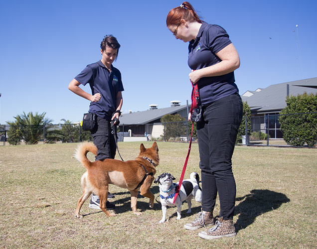 RSPCA School for Dogs training