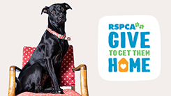 give to get them home world animal day rspca fundraiser 2019