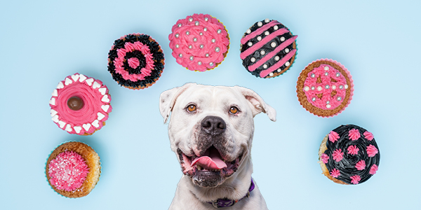 Fundraise for RSPCA Cupcake Day 2019